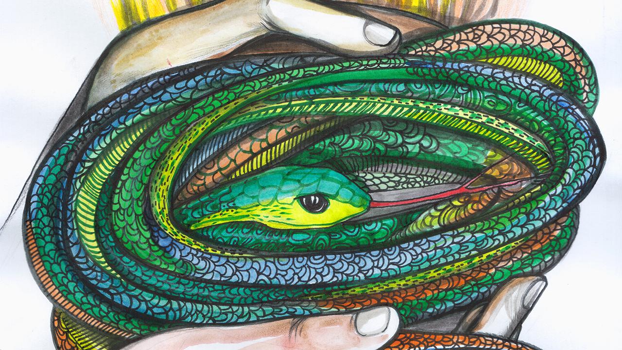 Дърварят и змията