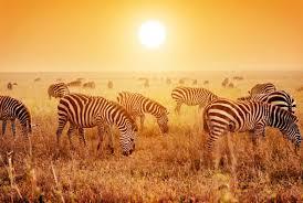 Танзания – Древни племена и дива природа - 9 епизода